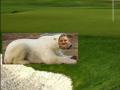 gobbstopper_bear